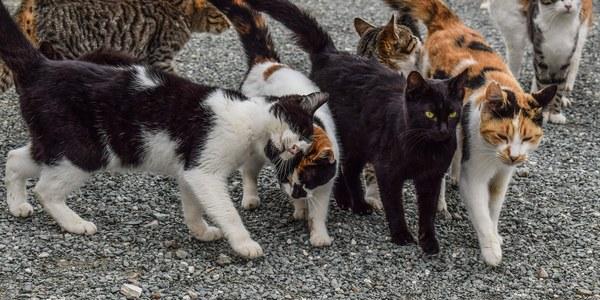 Projecte CES per al control de les colònies de gats