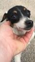 Comunicat: actuació municipal envers 9 gossos a la Serra