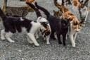 Salut animal i control de la població de gats ferals
